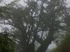 j01_15_arbre