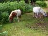 j02_23_deux_chevaux