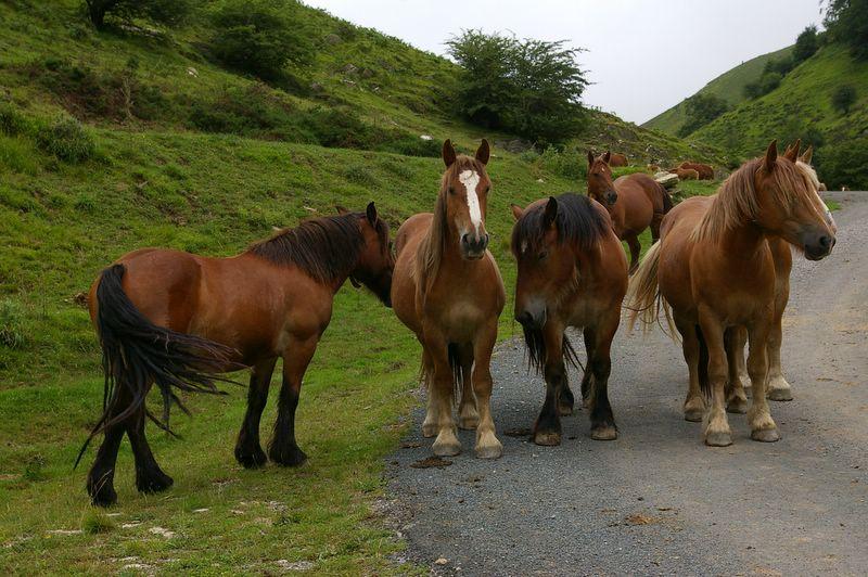 j05_06_chevaux