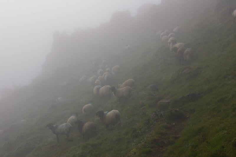 j06_01_moutons_dans_brouillard