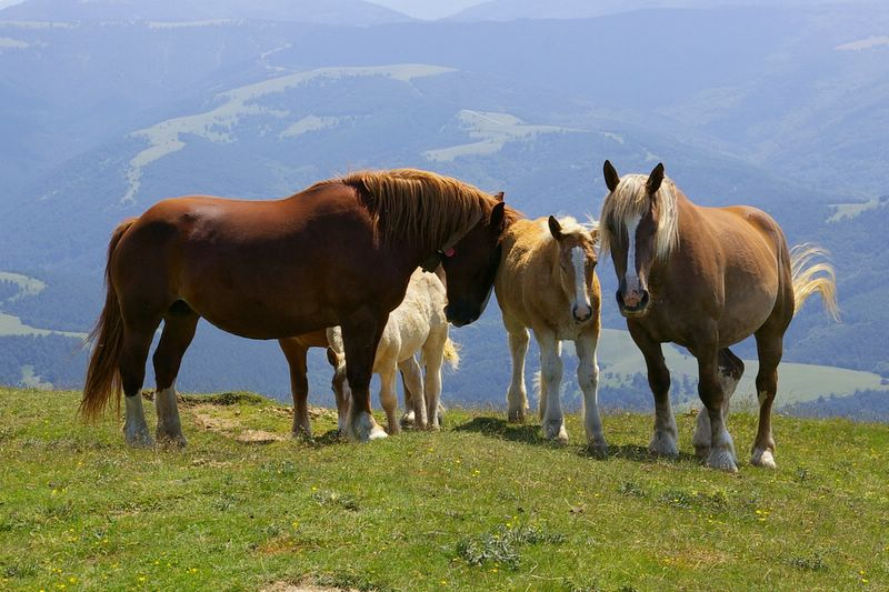 j06_21_chevaux