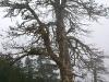 j13_20_arbre