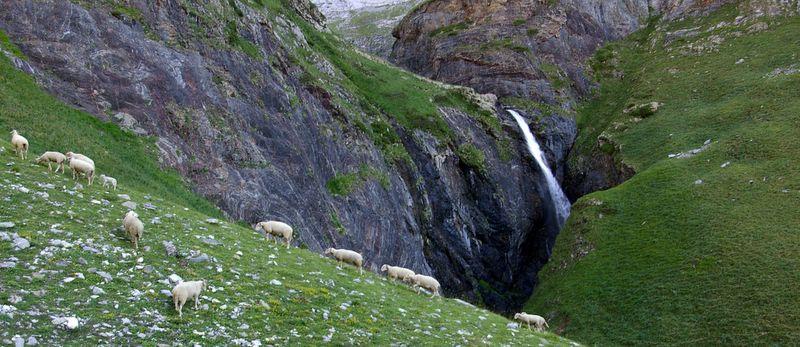 j15_03_moutons_cascade