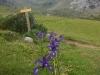 j16_04_fleurs_vers_espuguettes