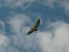 j17_42_vautour2