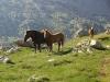 j25_09_chevaux