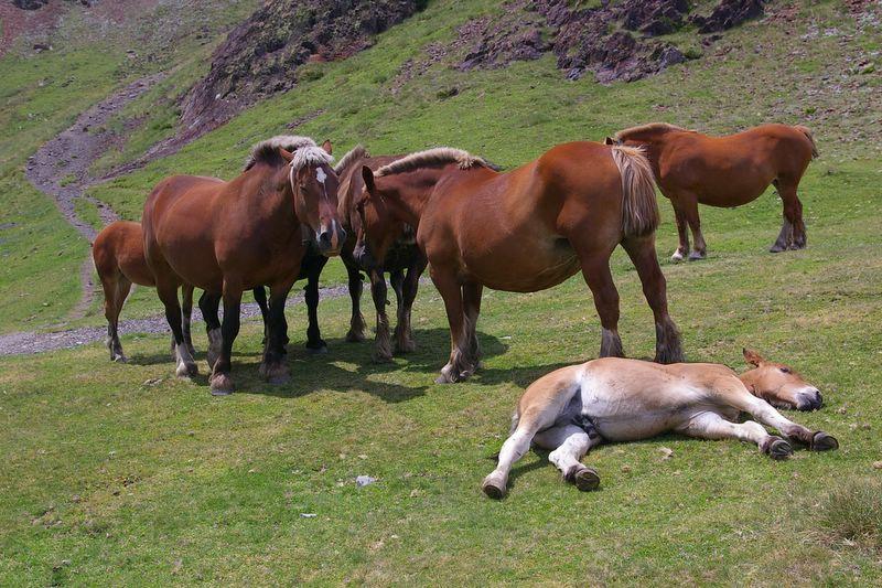 j35_23_chevaux_estanyol