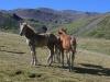 j37_07_chevaux_vallon_eyne